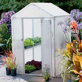 Build a mini greenhouse like the Lit'l Propagator for optimum insulation