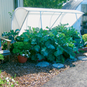 Deluxe Cold Frame Mini Greenhouse